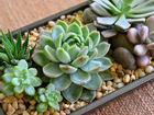 12 con giáp nên trồng cây gì trong nhà để thu hút tiền bạc, tài lộc?
