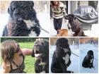 Chú chó bị bạo hành, trói ngoài trời lạnh suốt 4 năm, và may mắn thiên thần xuất hiện