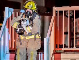 """Chú mèo """"anh hùng"""" cứu mạng chủ thoát khỏi đám cháy lúc nửa đêm"""