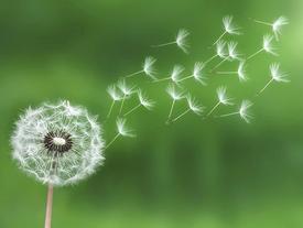 Phật dạy 9 cách đối đãi con người để cuộc sống đẹp hơn, phúc đức, may mắn trọn đời!