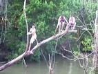 Clip: Những tai nạn oái oăm khi chặt cây