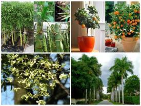 Nếu không muốn xui xẻo 'ùa vào nhà', hãy trồng ngay những loại cây này