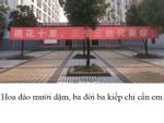Quên Song Joong Ki đi, nam sinh Trung Quốc cũng hóa thân thành 'Dạ Hoa' để tỏ tình rồi