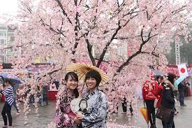 Phụ nữ Việt hoá thân thành phụ nữ Nhật trong lễ hội hoa anh đào