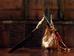Sinh vật có đầu giống như kim tự tháp là một trong những điểm nhấn của bộ phim chuyển thể từ trò chơi Silent Hill năm 2006. Hắn xuất hiện với thân hình một người đàn ông vạm vỡ đầy máu bẩn, đầu mang một khối tam giác sắt, tay cầm một cây thương khổng lồ.