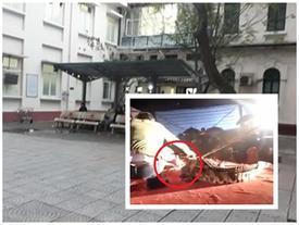 Nam diễn viên bị cá sấu cắn rách mặt đã hồi tỉnh ở BV Việt Đức