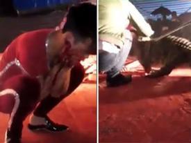 Vụ nam diễn viên xiếc bị cắn rách mặt: Cá sấu gây họa trong đêm diễn được đưa đến 'đóng thế'