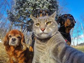 1001 kiểu selfie khó đỡ của các loại động vật