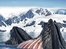 Những bức ảnh đẹp chưa từng thấy ở Nam Cực