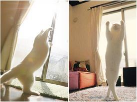 Chú mèo có màn múa ballet 'nhập tâm' nhất trên thế giới
