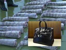 Đằng sau một chiếc túi Hermes Birkin đắt giá là số phận bi thảm của 3 con cá sấu