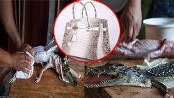 Đằng sau những siêu phẩm hàng hiệu là nỗi đau tột cùng của nhiều động vật, không chỉ riêng cá sấu