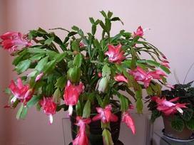Chỉ cần trồng cây này trong nhà nhiều điều thần kỳ sẽ gõ cửa gia đình bạn