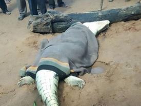 Mổ bụng cá sấu, kinh hãi phát hiện bé trai 8 tuổi bên trong