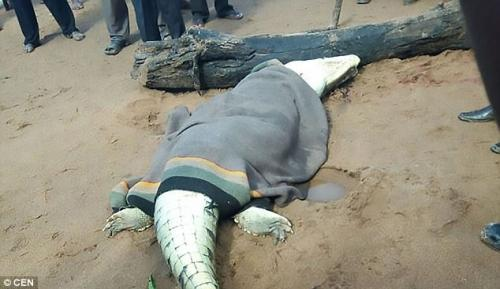 Mổ bụng cá sấu, kinh hãi phát hiện bé trai 8 tuổi bên trong - 1