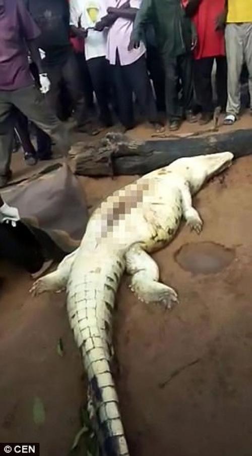Mổ bụng cá sấu, kinh hãi phát hiện bé trai 8 tuổi bên trong - 2