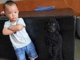 Bức ảnh về tình 'chị em' của cô chó 3 tuổi và cậu nhóc 2 tuổi đốn tim dân mạng