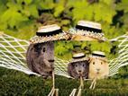 Truyện cười: Thử thách bắt chuột chọn chồng