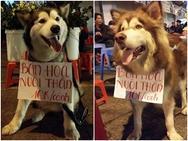 Loạt ảnh hài hước của 10 chú cún dùng 'thân' kiếm tiền để nuôi chủ