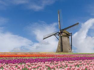 Sững sờ trước 7 triệu bông tulip đồng loạt bung nở