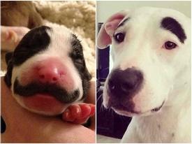 Những chú chó có 'râu', 'lông mày' nhờ bộ lông vô cùng độc đáo