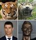 Ở Việt Nam có tượng hổ, còn thế giới có...Ronaldo