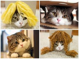 Giả vờ lạnh lùng, chú mèo béo Nhật Bản này đốn tim nhiều người ngoài tưởng tượng