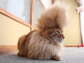 Không nhịn được cười với 22 bộ lông siêu độc đáo của thú cưng