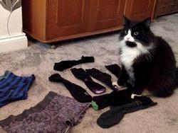 Chú mèo 'biến thái' có sở thích ăn cắp đồ lót nhà hàng xóm