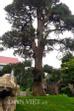 Ngoài khâu chọn đá, các loại cây quý hiếm cũng được ông Tâm mua từ Châu Á, Châu Âu, Châu Mỹ...về.