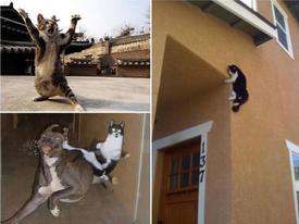 15 chú mèo 'ninja' khiến bạn không nhịn được cười
