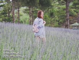 Ngất ngây 3 cánh đồng hoa oải hương đẹp mê hồn ở Đà Lạt