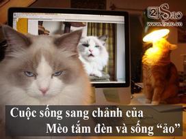 Ảnh hài: Loạt ảnh hài hước về cuộc sống 'bá đạo' của loài mèo