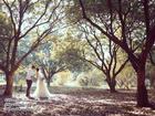 Cùng check in 'khu vườn cổ tích' đẹp như mơ giữa Hà Nội nào!