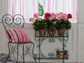 Muốn may mắn, giàu sang, tài vận rộn ràng, hãy trang trí nhà với những loại hoa sau