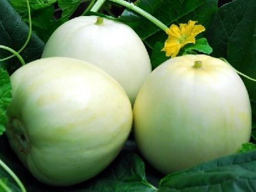 Khi ăn dưa lê nên gọt dày lớp vỏ để dưa được ngọt hơn. Ảnh minh họa