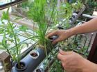 Thiết bị trồng rau xanh tự động trong nhà