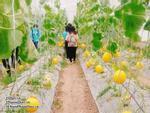 Tha hồ 'chụp choẹt' với 4 trang trại tuyệt đẹp tại Sài Gòn