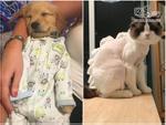 Ảnh hài:  'Dở khóc dở cười' khi nhờ bạn thân trông nom thú cưng