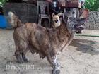 Chú chó kỳ lạ có bàn chân như hải cẩu và thích nuôi mèo