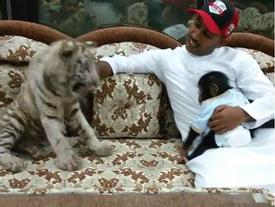 Choáng với thú nuôi hổ, báo trong nhà làm thú cưng của 'hội con nhà giàu'