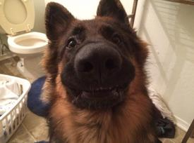 19 Reasons Why You Must Never Get A German Shepherd