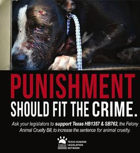Texas Animal Abusers Will Soon Face Up To 10 Years In Prison