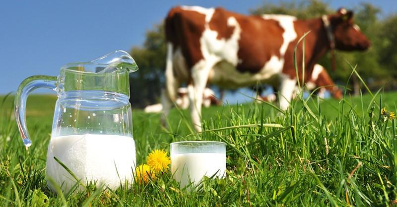 Kết quả hình ảnh cho công ty sữa bò Brownes