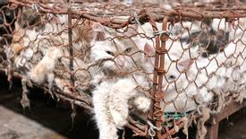 Help the Cats of Yulin, Too - Ban Dog AND Cat Meat in China