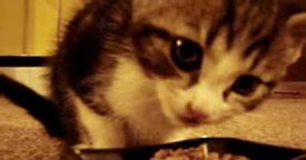 It's mealtime for Kitty. As soon as lunch starts, brace yourself