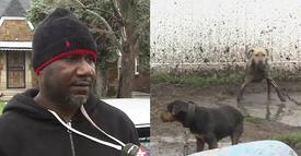 Dog Fighting Breeder Found Tied Up And Beaten Pretty Bad By Masked Men