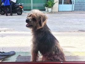 Xúc động nhất Facebook hôm nay: Chú chó ở Đồng Nai quay về tìm chủ cũ sau 3 năm bị bắt đi