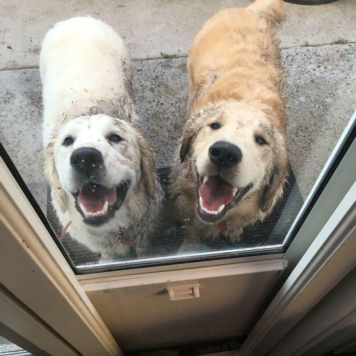 Just Gave These Two Assholes A Bath...