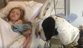 The Incredible Story Of How This Service Dog Helped This Little Girl Will Warm Your Heart